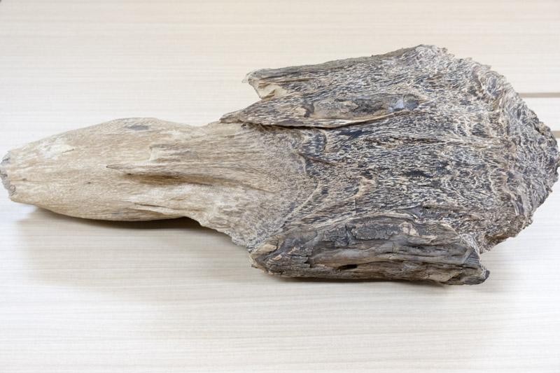 沈香の原木写真