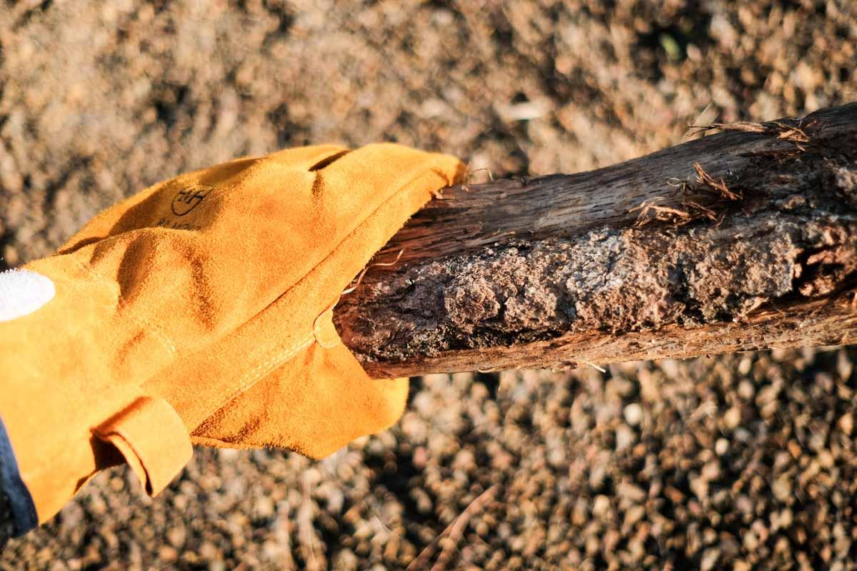 MICRA MOCOのレザーグローブで薪を持ったところ